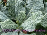 Blue-green Dinosaur or Lacinato kale is easy to grow and hardy