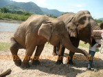 This elephant had a broken back and hip after being forced to mate.  You know how you feel when your leg hurts?  Imagine weighing over 2000 pounds and feeling the same way!